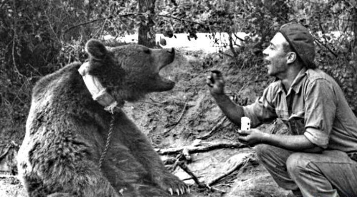 Wojtek Polish Soldier Bear