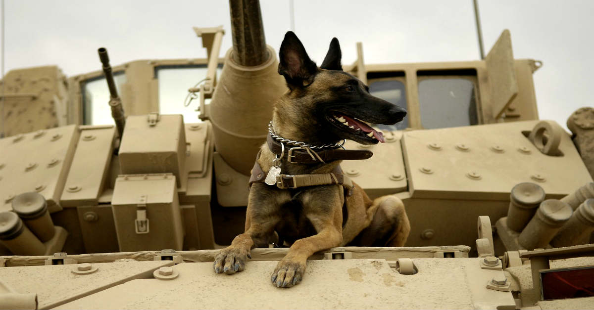 Modern Military Working Dog