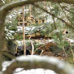 M1 tank Camo trees